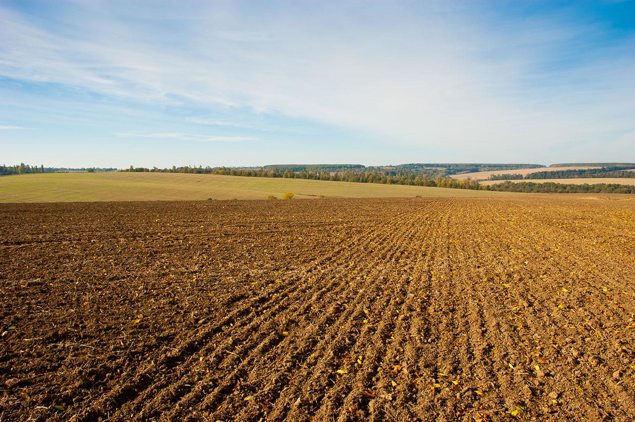 Fallow field (credit: Shutterstock)